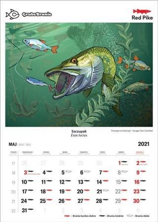 Wędkarski Kalendarz Ścienny Na 2021 - Kalendarzyk Brań Red Pike NOWOŚĆ!